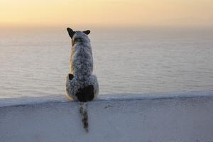 Dog, Oia, Santorini Island, Cyclades Islands, Greek Islands, Greece by Martin Ruegner