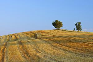 Harvested Wheat Field with Pine Tree, Summer. by Martin Ruegner
