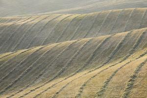 Rows of Harvested Wheat Field, Val D'orcia, Siena Province, Tuscany, Italy by Martin Ruegner