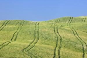 Tire Tracks in Wheat Field, Val D'orcia, Siena Province, Tuscany, Italy by Martin Ruegner