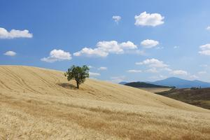 Tree in Wheat Field with Fluffy Clouds, Summer. by Martin Ruegner