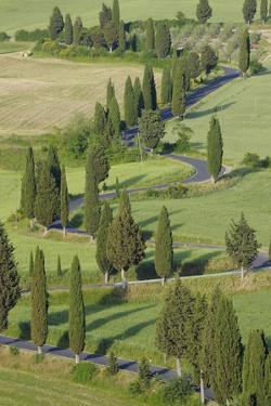Winding Road Lined with Cypress Trees, Monticchiello, Siena Province, Tuscany, Italy by Martin Ruegner