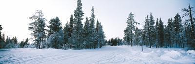 Winter Drifts