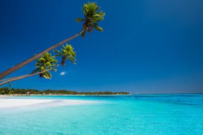 Few Coconut Palms on Deserted Beach of Tropical Island by Martin Valigursky