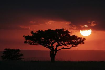 Tree silhouetted at sunset, Masai Mara, Kenya by Martin Withers