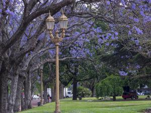 Alley with jacaranda trees in park Plaza Intendente Seeber. Buenos Aires, capital of Argentina. by Martin Zwick