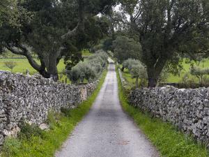 Cork oak in the Alentejo. Portugal by Martin Zwick