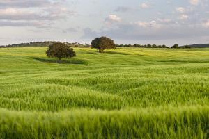 Fields of grain, Mertola, Parque Natural do Vale do Guadiana, Portugal, Alentejo by Martin Zwick