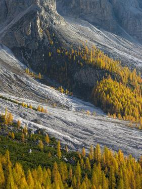 Golden larches (larix) in Val Venegia. Pale di San Martino in the Dolomites of Trentino. by Martin Zwick