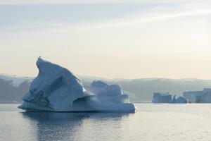 Icebergs in the Uummannaq fjord system, northwest Greenland by Martin Zwick
