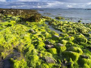 Isle of Lewis, Coast at the Eye Peninsula. Scotland in July by Martin Zwick