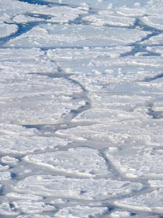 Pancake ice, new sea ice is building up. Disko Bay during winter, West Greenland
