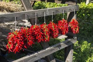 Red Hungarian Hot Chili Locally known as Paprika, Kalocsa, Hungary by Martin Zwick