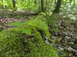 Seedling on deadwood. The Thuringian Forest Nature Park. Primeval Beech Forests of the Carpathians by Martin Zwick