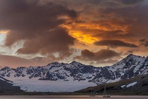 St. Andres Bay on South Georgia Island during sunset, huge colony of King Penguins by Martin Zwick