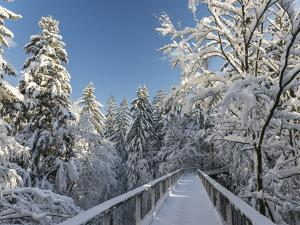 The Canopy Walkway of the Visitor Center of the National Park Bavarian Forest , the Deep of Winter by Martin Zwick
