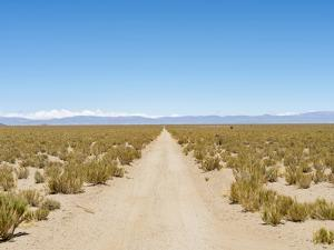 The track RN 38. Landscape near the salt flats Salar Salinas Grandes in the Altiplano, Argentina. by Martin Zwick