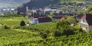 Village Spitz Nested in the Vineyards of the Wachau. Austria by Martin Zwick