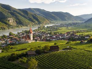 Vineyards of Weissenkirchen In The Wachau, Austria by Martin Zwick