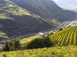 Viniculture and the Brenner Motorway in Fall, South Tyrol, Italy by Martin Zwick