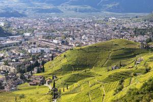Viniculture around Bozen During Autumn, South Tyrol, Italy by Martin Zwick