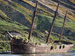 Wreck of the Bayard in Ocean Harbor, whaling station in South Georgia, colony of South Georgia Shag by Martin Zwick