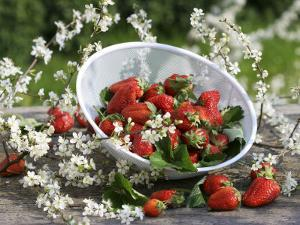 Fresh Strawberries in Sieve Surrounded by Sloe Blossom by Martina Schindler