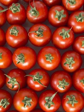 Roma Tomatos by Martina Schindler