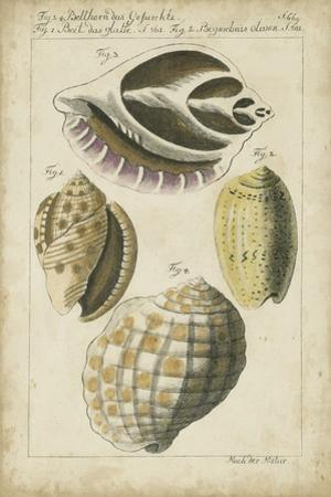 Vintage Shell Study I by Martini