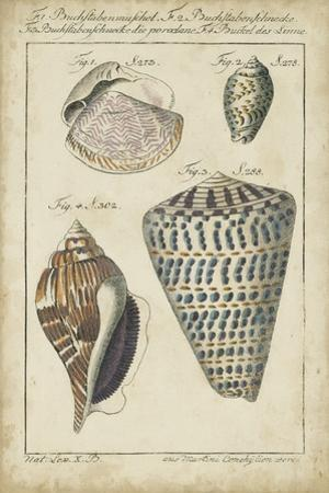 Vintage Shell Study II by Martini