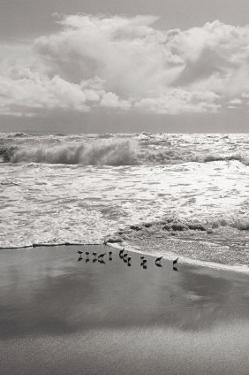 Shorebirds, Point Reyes by Marty Knapp