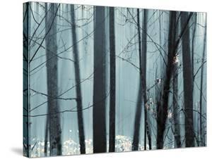 Spring Mist II by Marvin Pelkey