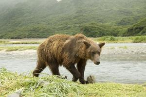 Brown Bear by River by Mary Ann McDonald