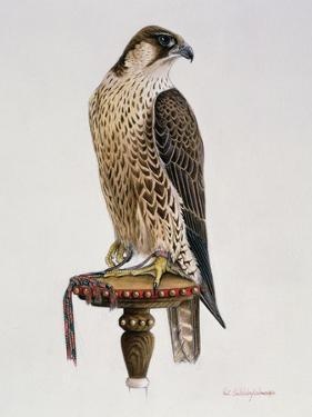 Passage Peregrine, 1980 by Mary Clare Critchley-Salmonson