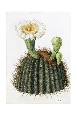 A Painting of a Saguaro Cactus and its Blossom by Mary E. Eaton