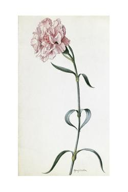 A Painting of a Sprig of Pink Carnation by Mary E. Eaton