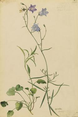 This Plant Is a Member of the Bluebell Family by Mary E. Eaton
