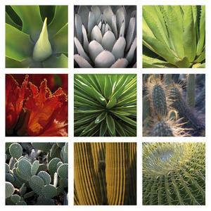 Desert Flowers by Mary Karla