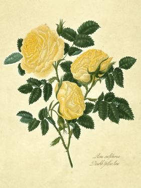 Double Yellow Rose by Mary Lawrence