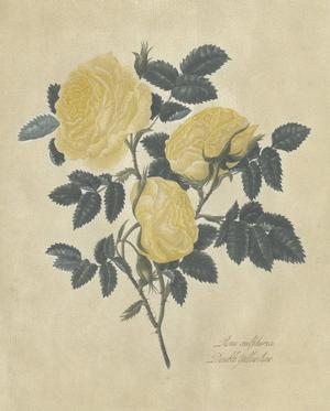 Embellished Double Yellow Rose by Mary Lawrence
