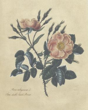 Embellished Sweet Briar Rose by Mary Lawrence
