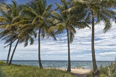 Beach Palms by Mary Lou Johnson