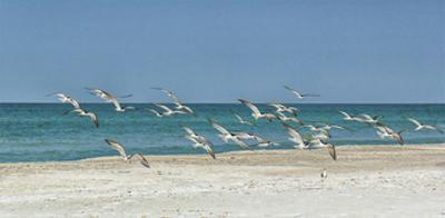 Beach Skimmers by Mary Lou Johnson