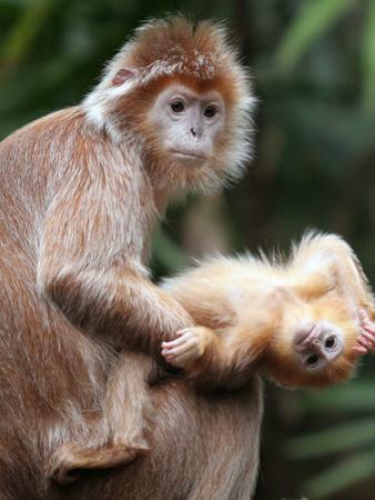 APTOPIX Bronx Zoo by Mary Schwalm