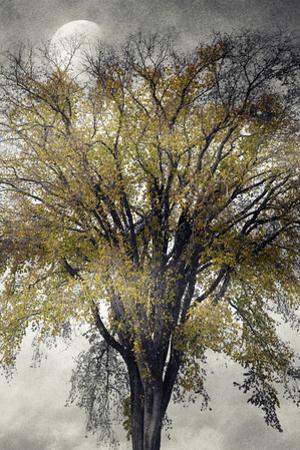 Elm by Mary Woodman