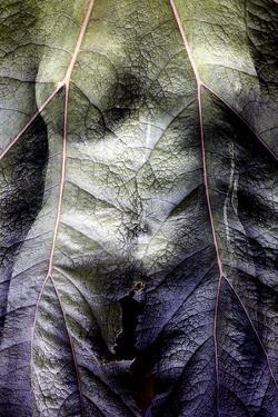 The Shape of a Leaf by Mary Woodman