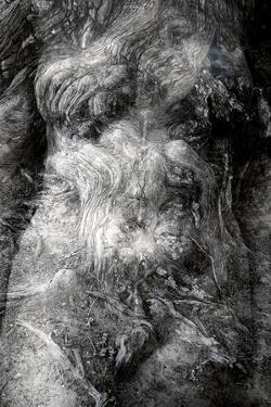 Torso/Cypress by Mary Woodman