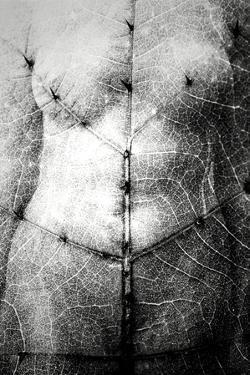 Torso/Thorns by Mary Woodman