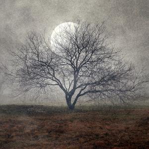 Tree by Mary Woodman