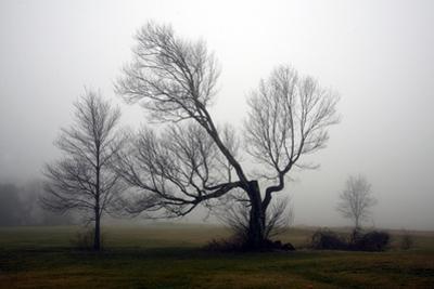 Trees in Fog II by Mary Woodman